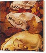Three Animal Skulls Wood Print
