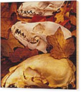 Three Animal Skulls Wood Print by Garry Gay