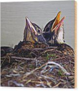 Three Baby Robins Wood Print