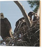 Three Bald Eagles In The Nest Wood Print by Mitch Spillane