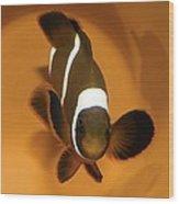 Three-band Anemonefish Wood Print