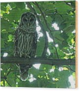 Three Barred Owls Wood Print