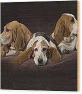 Three Basset Hound On Brown Muslin Wood Print