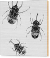Three Beetles X-ray Wood Print