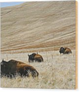 Three Bison Wood Print