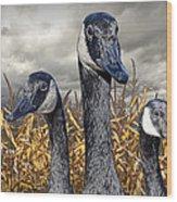 Three Canada Geese In An Autumn Cornfield Wood Print