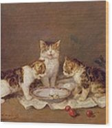 Three Cats - Red Cherries And Bees Wood Print
