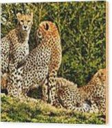 Three Cats Wood Print