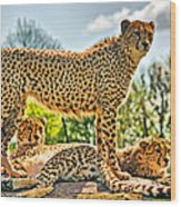 Three Cheetahs Wood Print