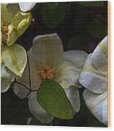 Three Clematis More Wood Print
