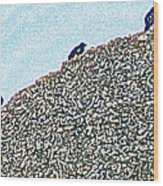 Three Crows And Oyster Shells Wood Print