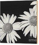 Three Daisy Amigos Wood Print