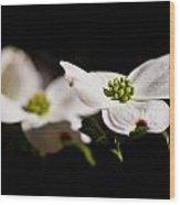 Three Dogwood Blossoms On Black Wood Print