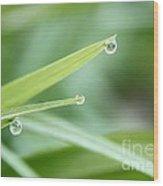 Three Droplets Wood Print