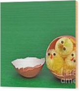Three Easter Chicks In An Egg Shell Wood Print