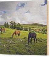 Three Horses Grazing In Field Wood Print