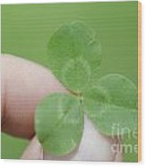 Three Leaf Clover In A Hand Wood Print