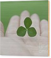 Three Leaf Clover Wood Print