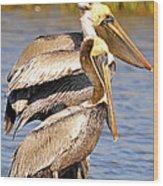 Three Pelicans On A Stump Wood Print