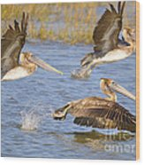 Three Pelicans Taking Off Wood Print