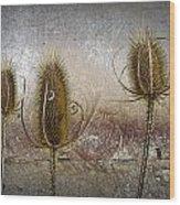 Three Prickly Teasels Wood Print