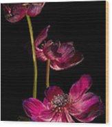 Three Purple Anemones Wood Print