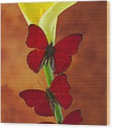 Three Red Butterflies On Calla Lily Wood Print
