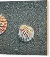 Three Sea Shells Wood Print