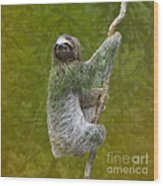 Three-toed Sloth Climbing Wood Print by Heiko Koehrer-Wagner