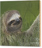 Three-toed Sloth Wood Print by Heiko Koehrer-Wagner