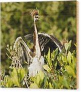 Three Tricolored Heron Egretta Tricolor Wood Print