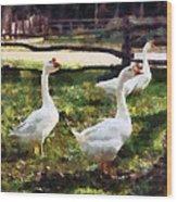 Three White Geese Wood Print
