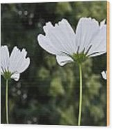 Three Wildflowers Wood Print