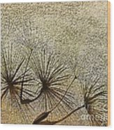 Three Wishes Wood Print by Artist and Photographer Laura Wrede