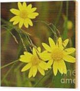 Three Yellow Amigos  Wood Print