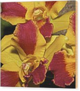 Three Yellow And Red Orchids Wood Print