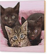 Threee Kittens In A Pink And White Basket Wood Print