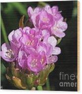Thrift Named Joystick Lilac Wood Print