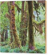 Through Moss Covered Trees Wood Print