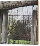 Through The Eye Of The Stick Wood Fence Wood Print