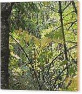 Through The Woods Wood Print
