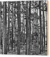 Thru The Pines Wood Print