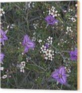 Thysanotus Patersonii And Leptospermum Wood Print