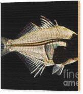 Tibetan Glassfish Wood Print