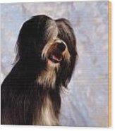 Tibetan Terrier Wood Print