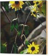 Tickseed Sunflowers Wood Print