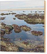 Tide Pools Wood Print