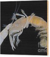 Tidepool Ghost Shrimp Wood Print