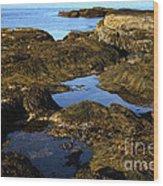 Tidepool In Maine Wood Print