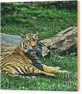 Tiger - Endangered - Lying Down - Tongue Out Wood Print